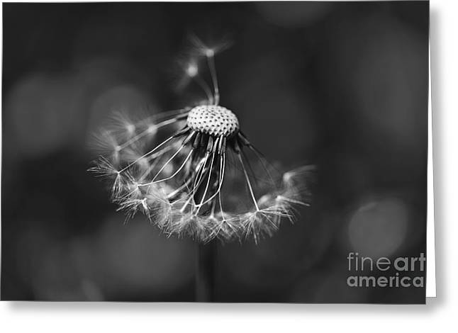 The Underrated Dandelion 2 Greeting Card by Natalie Kinnear