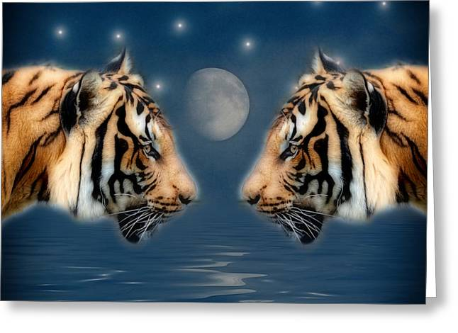 Wildcat Greeting Cards - The view Greeting Card by SK Pfphotography