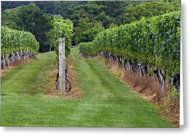 Grape Vineyard Greeting Cards - The Vineyard Greeting Card by Keith Armstrong