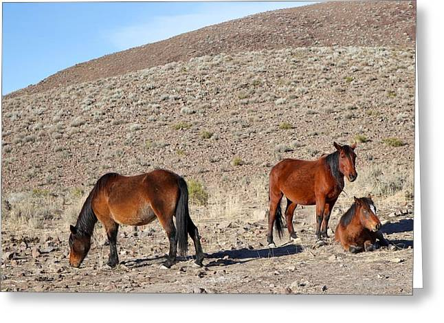 Grazing Snow Greeting Cards - The Virginia Range Greeting Card by Maria Jansson