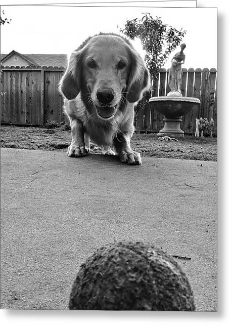 Golden Retriever Playing Ball Greeting Cards - The Wait Greeting Card by Michelle Rose