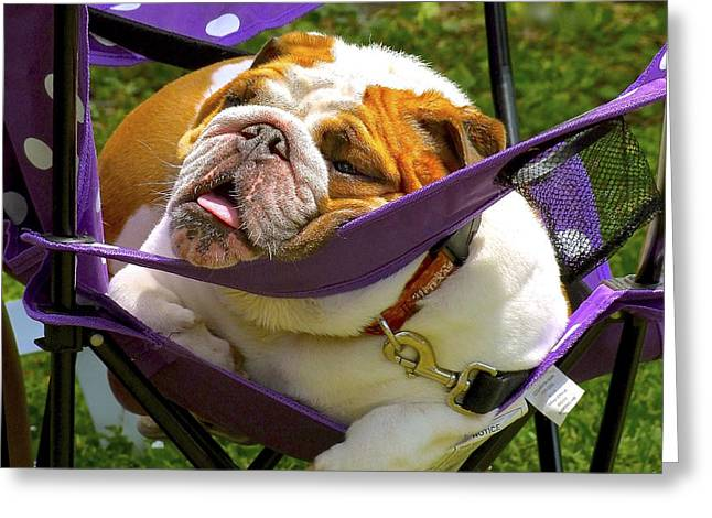 Lawn Chair Greeting Cards - The Warm Afternoon Greeting Card by Olivia  Bonham