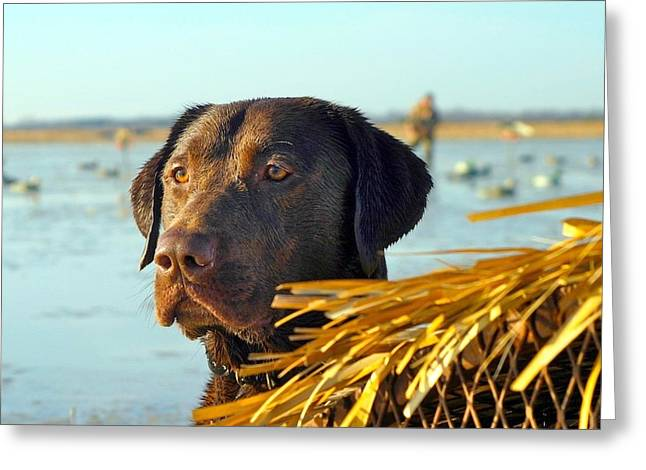 Chocolate Lab Greeting Cards - The Watch Greeting Card by Stebin Horne