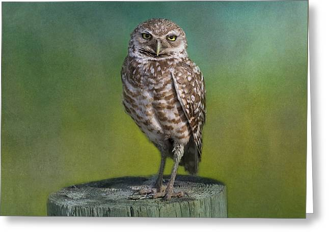 Usa Photographs Greeting Cards - The Watcher Greeting Card by Kim Hojnacki