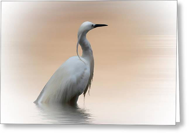 White Photographs Greeting Cards - The Water bird Greeting Card by Sharon Lisa Clarke