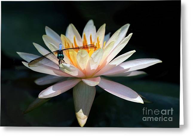 Macro Dragonfly Picture Greeting Cards - The Water Lily and the Dragonfly Greeting Card by Sabrina L Ryan