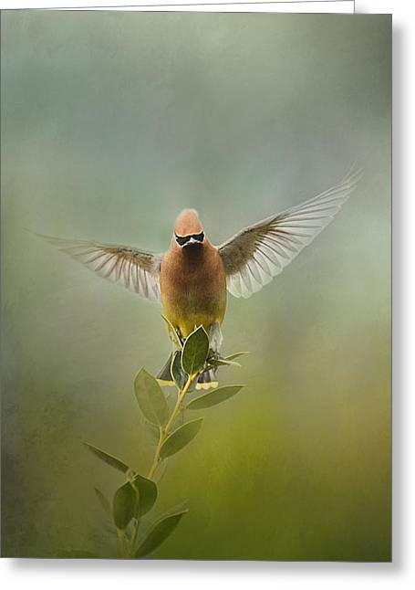 Cedar Waxwing Greeting Cards - The Waxwing Welcomes Spring Greeting Card by Jai Johnson