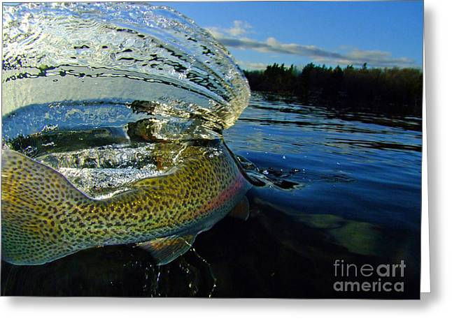 Best Sellers -  - Rainbow Trout Greeting Cards - The Way Of The Trout Greeting Card by Brian Pelkey