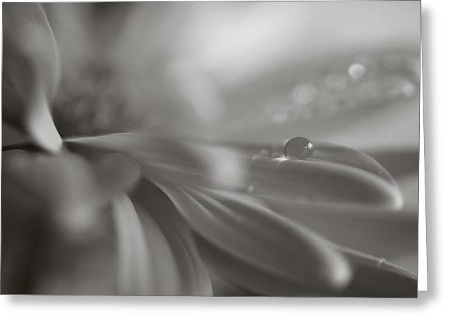 Dew Drop Greeting Cards - The Way Your Eyes Sparkle Greeting Card by Laurie Search