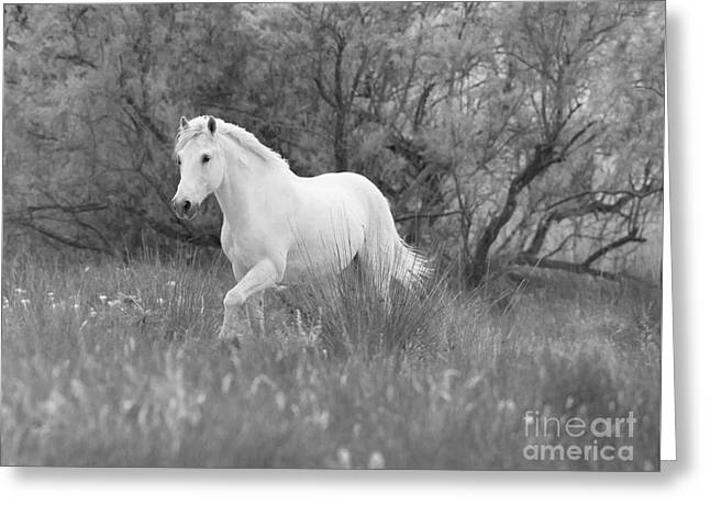 The White Horse In The Forest Greeting Card by Carol Walker