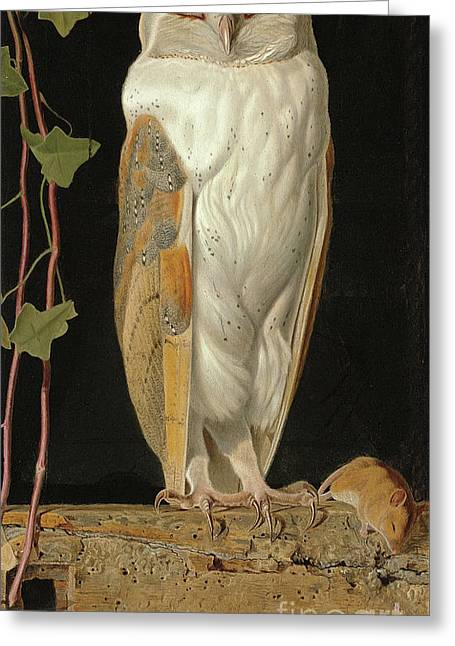 The White Owl Greeting Card by William J Webbe