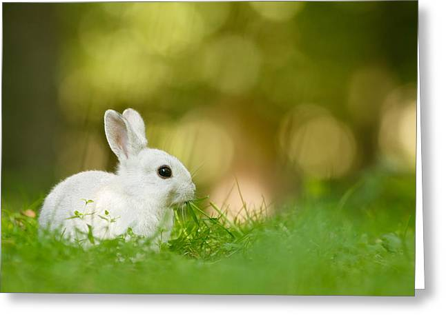 Foraging Greeting Cards - The White Rabbit Greeting Card by Roeselien Raimond