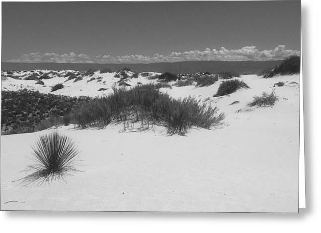 The White Sands, Nm Greeting Card by Lori Thompson