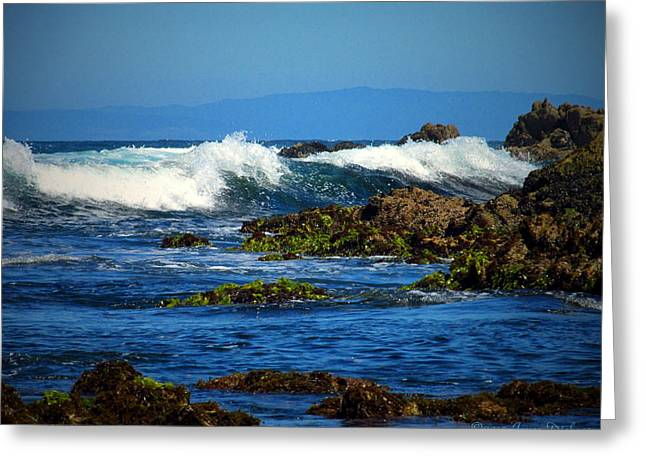 Pacific Ocean Prints Greeting Cards - The Wild And Wonderful Pacific II Greeting Card by Joyce Dickens