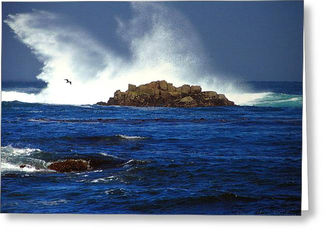 Pacific Ocean Prints Greeting Cards - The Wild And Wonderful Pacific Six Greeting Card by Joyce Dickens