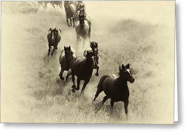 Bucking Horses Greeting Cards - The Wild Bunch 1 Greeting Card by Bob Christopher
