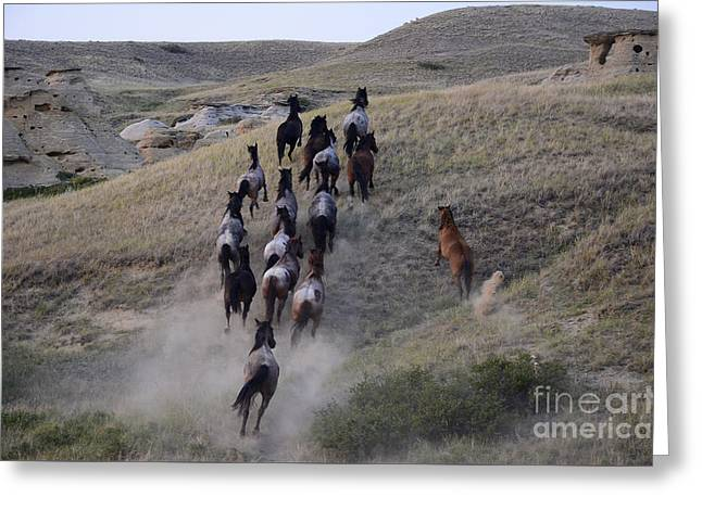 Bucking Horses Greeting Cards - The Wild Bunch 2 Greeting Card by Bob Christopher