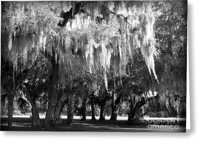 Weeping Greeting Cards - the Willows Weep Greeting Card by Charlotte Stevenson