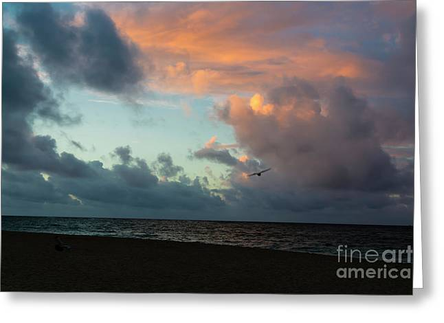 Wishes Greeting Cards - The Wind Beneath  My Wings Greeting Card by Jon Burch Photography
