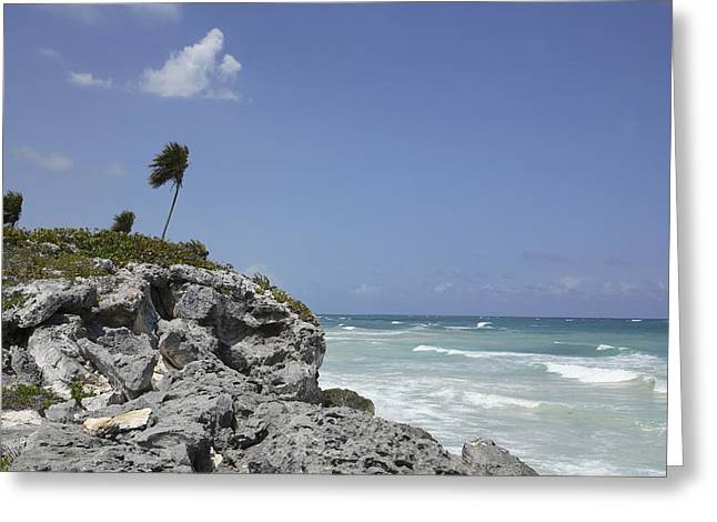 Sea View Greeting Cards - The Wind Blows Palm Trees On A Ridge Greeting Card by Stephen Alvarez