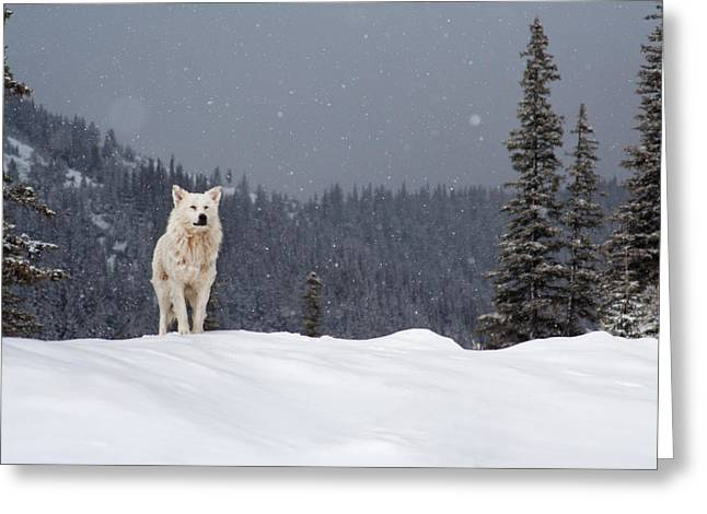 The Wolf Greeting Card by Evgeni Dinev