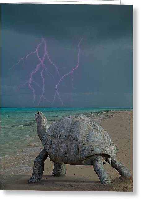 Tortoise Greeting Cards - The Wonders of Mother Nature Greeting Card by Betsy C Knapp