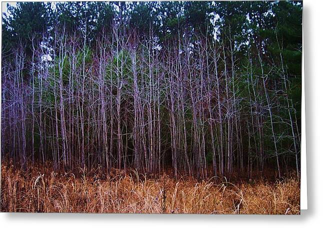 Anna Villarreal Garbis Greeting Cards - The Woods 3 Greeting Card by Anna Villarreal Garbis