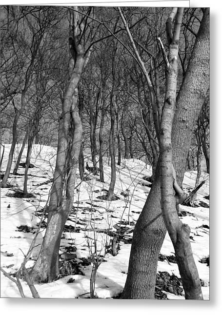Portrait With Mountain Greeting Cards - The woods and the snow BW Greeting Card by Joshua Akinwande