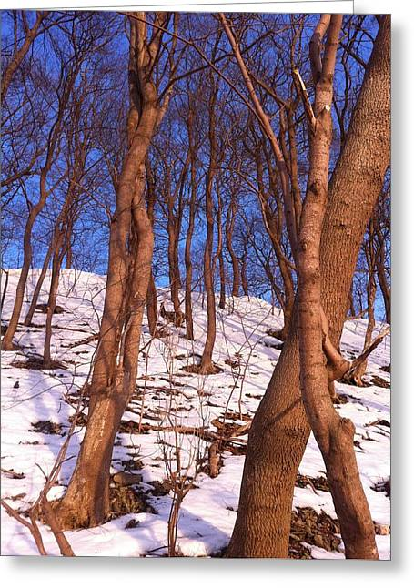 Portrait With Mountain Greeting Cards - The woods and the snow Greeting Card by Joshua Akinwande