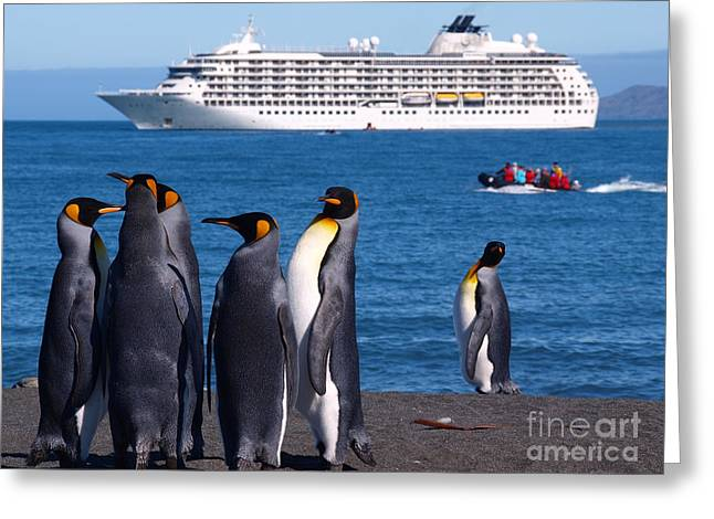 The Penguin Greeting Cards - The World Gold Harbour South Georgia Greeting Card by Per Lidvall