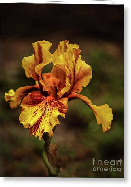The Yellow Beauty Greeting Card by Robert Bales