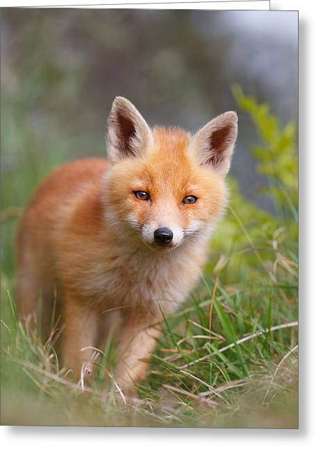 The Young And Eager Red Fox Kit Greeting Card by Roeselien Raimond