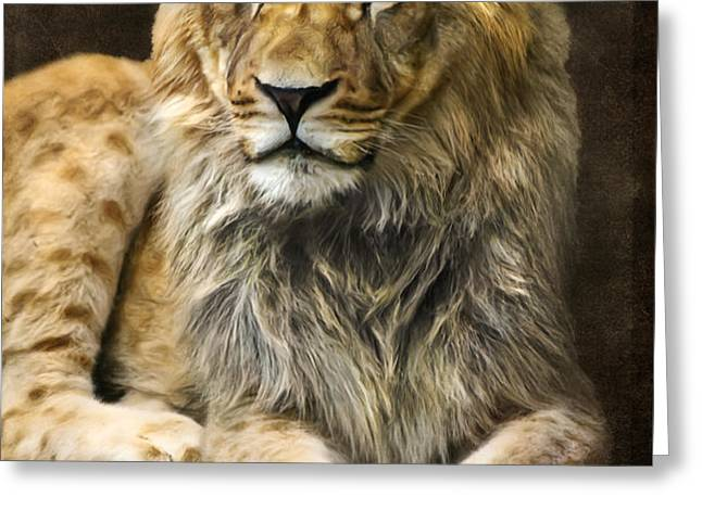 The young lion Greeting Card by Angela Doelling AD DESIGN Photo and PhotoArt
