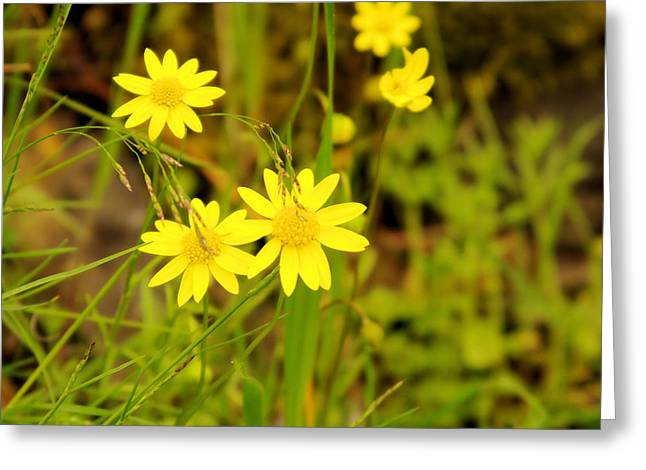 Thee Yellow Smiles  Greeting Card by Jeff Swan