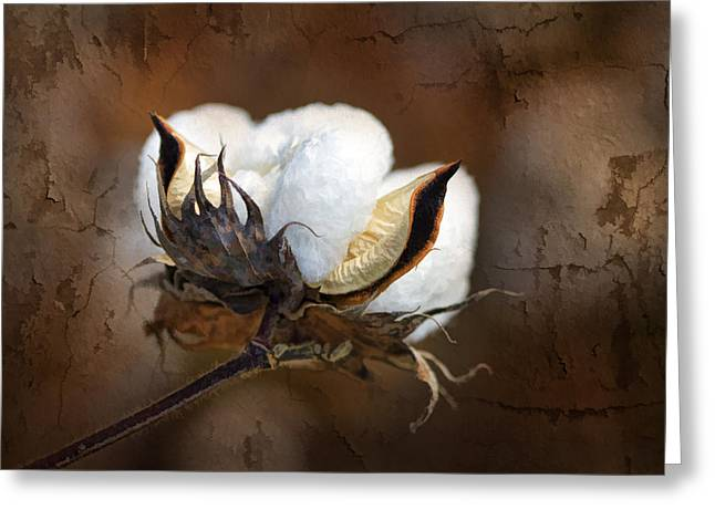 Them Cotton Bolls Greeting Card by Kathy Clark