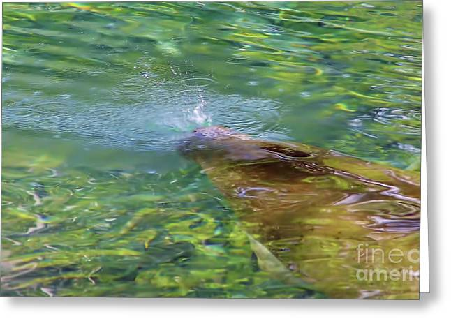 Print Photographs Greeting Cards - There She Blows Greeting Card by D Hackett
