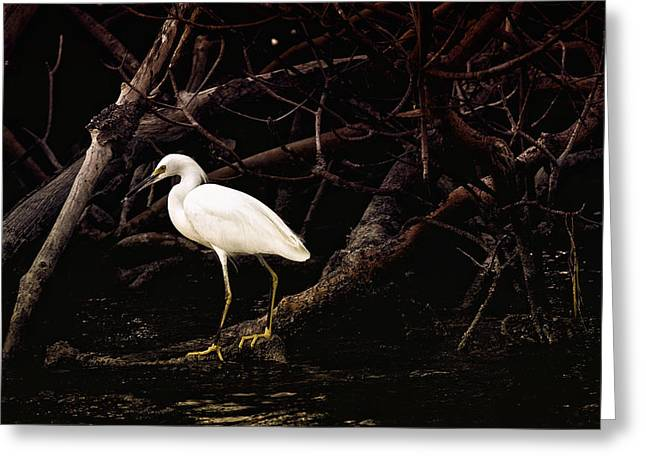 Water Fowl Greeting Cards - Thicket Greeting Card by Joel P Black