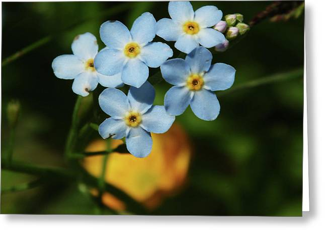 Thimble Blue Wildflowers Greeting Card by Georgia Sheron