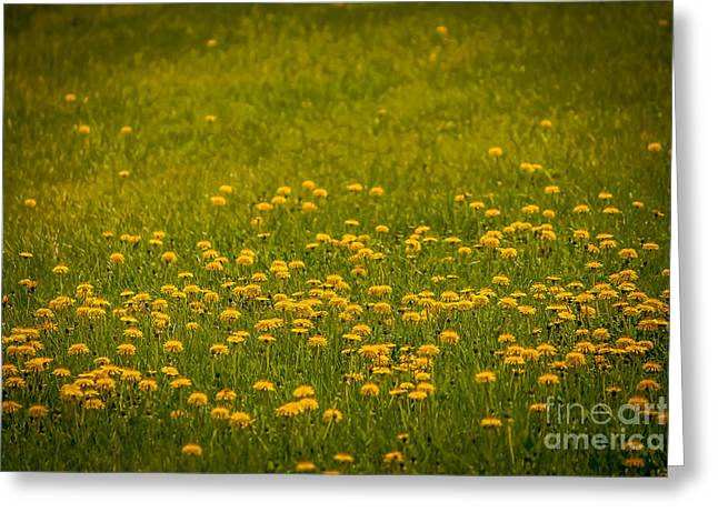 Thinking Of Spring Greeting Card by Claudia M Photography