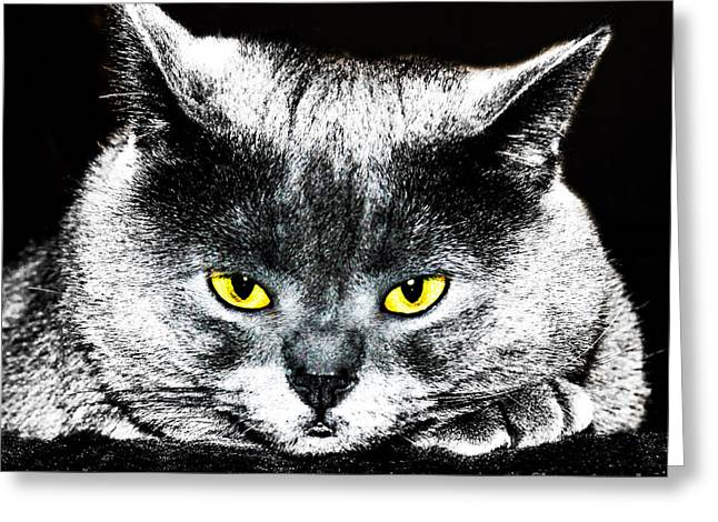 Cat Pyrography Greeting Cards - Thinking  Greeting Card by Olga Photography