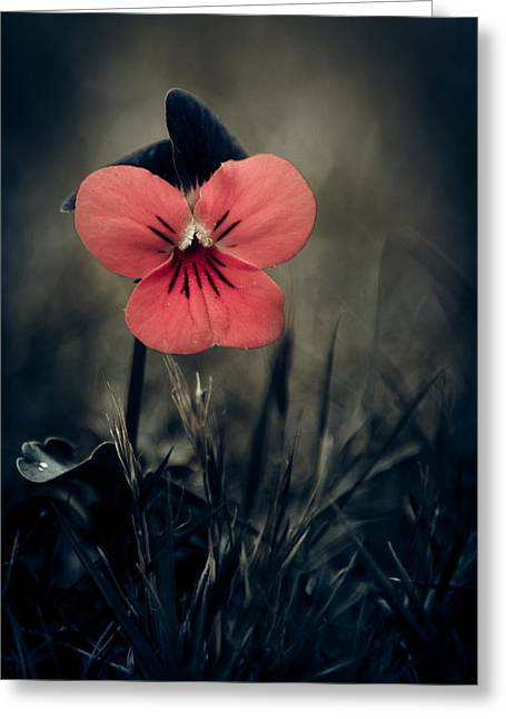 Selective Colouring Photographs Greeting Cards - Thinking Pansy Greeting Card by Loriental Photography