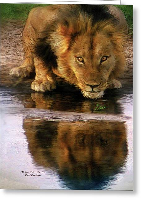African Lion Art Greeting Cards - Thirst For Life Greeting Card by Carol Cavalaris
