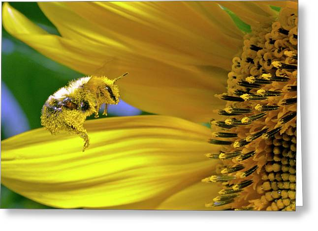 This Bee Needs A Bath Greeting Card by David Freuthal