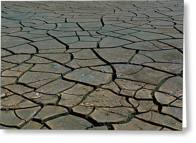 This Is A Pattern In Dry, Cracked Mud Greeting Card by Panoramic Images
