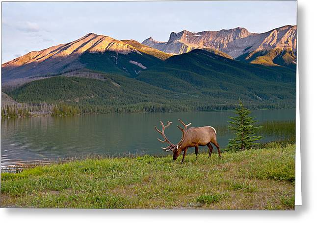 Jasper Greeting Cards - This is Alberta 10 - Bucks Sunset Snack Greeting Card by Paul W Sharpe Aka Wizard of Wonders