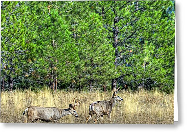 Two Deer Greeting Cards - This is British Columbia 14 - Two and Three Points Greeting Card by Paul W Sharpe Aka Wizard of Wonders