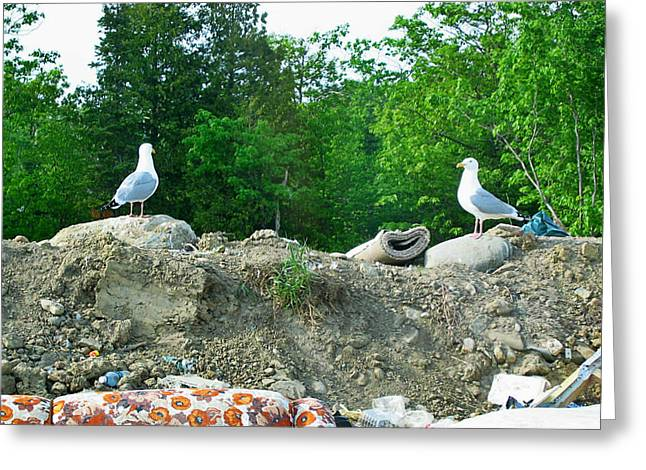 Manitoulin Greeting Cards - This Is Dinner Mate Greeting Card by Jessica Tolemy