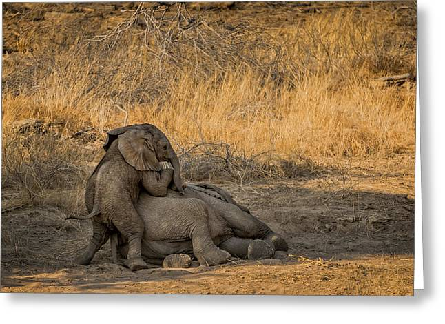 Full Body Greeting Cards - This is Namibia No.  4 - Come on Bro I Wanna Play Greeting Card by Paul W Sharpe Aka Wizard of Wonders