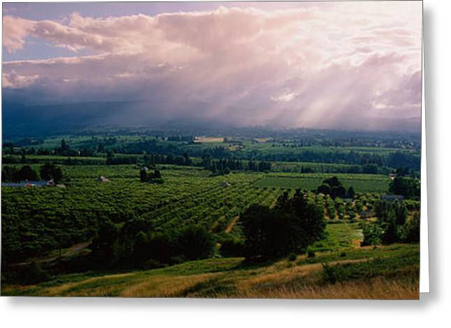 Hood River Oregon Greeting Cards - This Is Near The Hood River. It Greeting Card by Panoramic Images