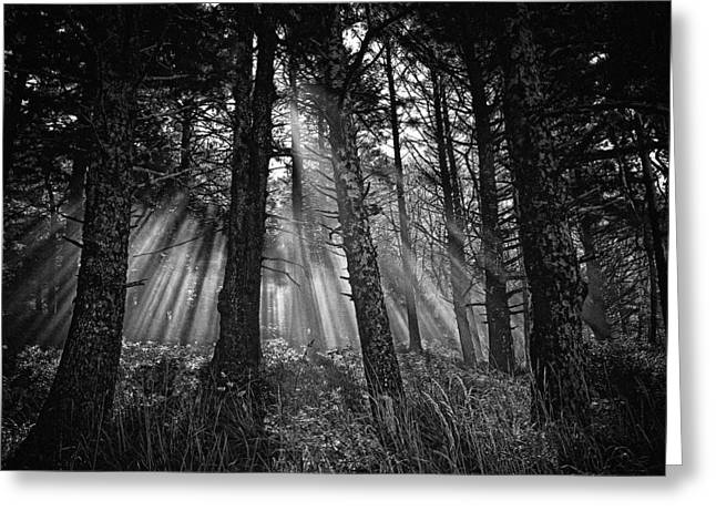 Forest Floor Greeting Cards - This is our World - No.1 - Forest Floor Morning Mist BW Greeting Card by Paul W Sharpe Aka Wizard of Wonders